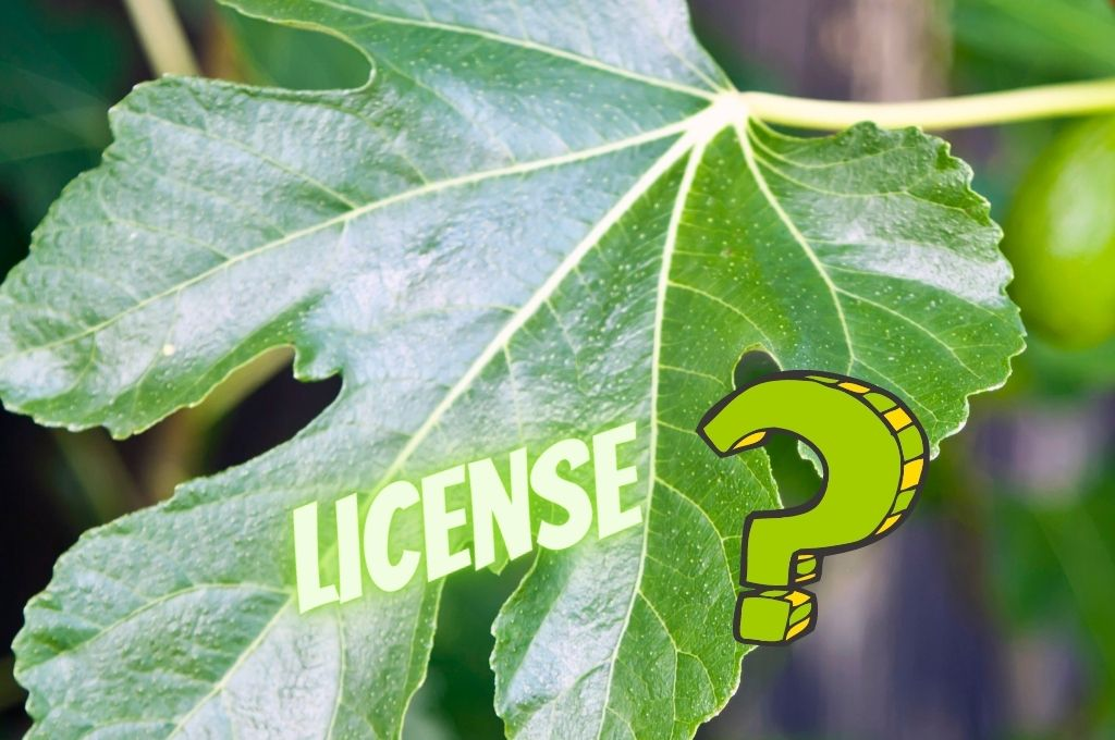 What does a compulsory license have in common with a fig leaf?