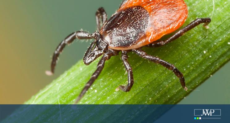 Big little enemy – the tick